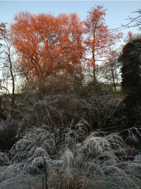 willow5dec