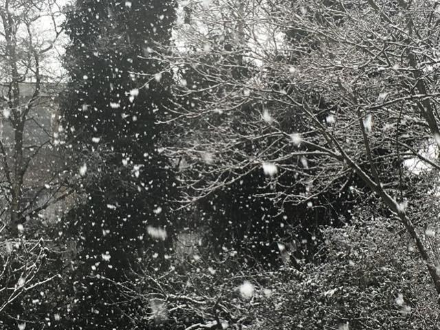 sneeuw15jan1