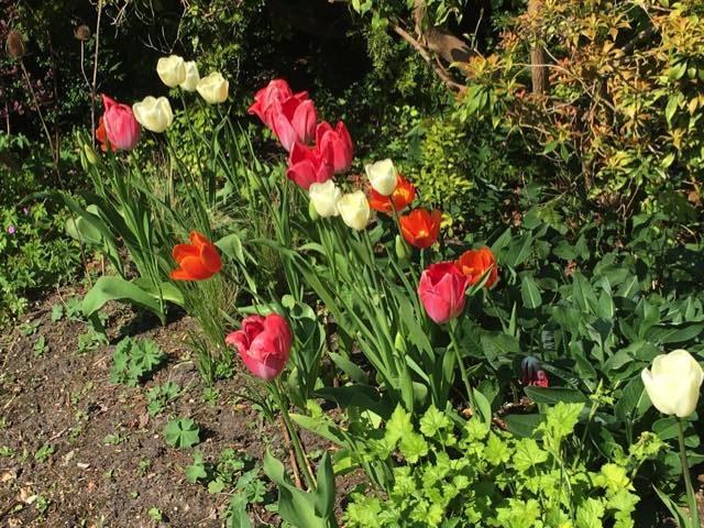 tulpvoortuin begin mei