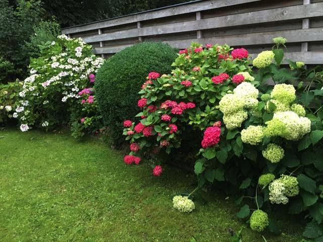 hortensoia buren