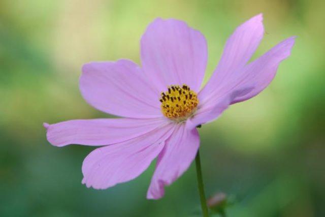 bloemannet