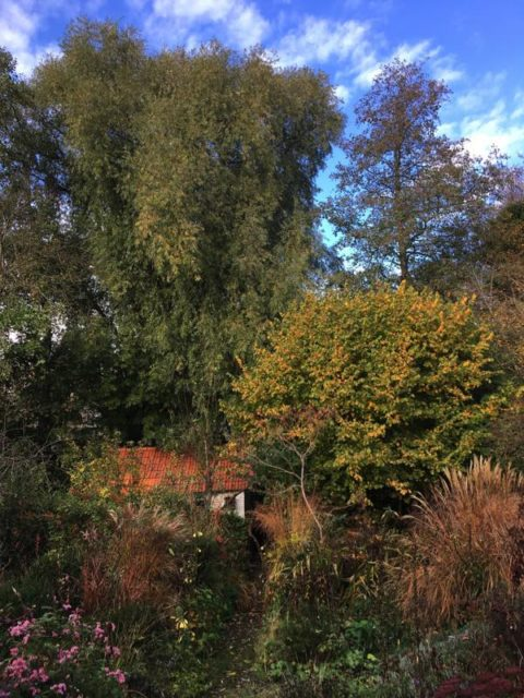 autumnwillow5nov