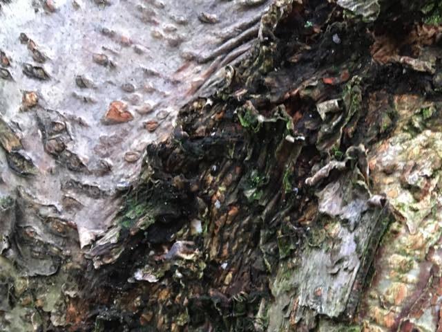 hazelaardetailhout